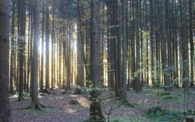 Why is there a timber shortage?