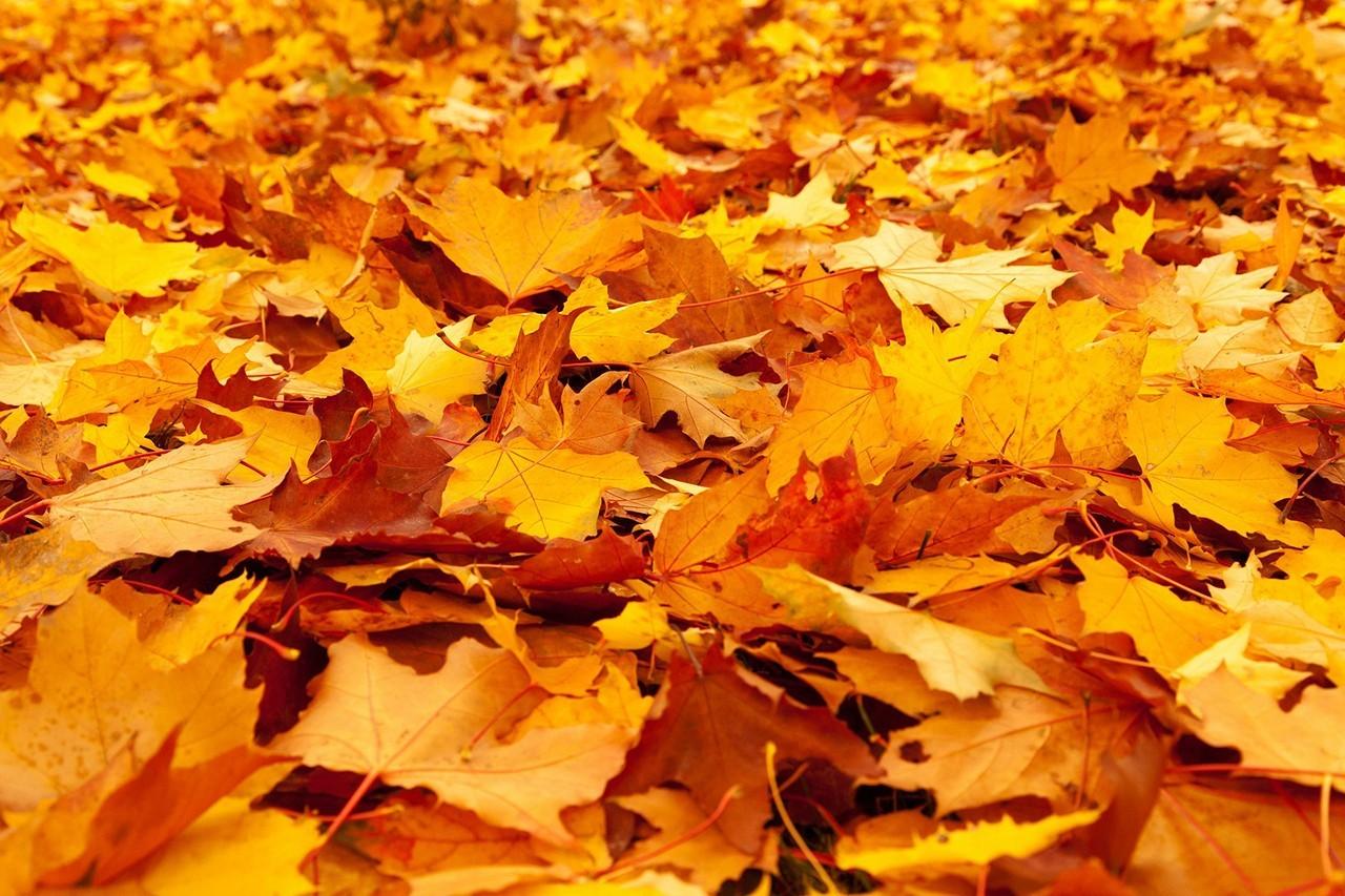 leaves-on-the-floor